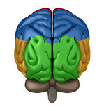 Posterior view of the Brain Royalty Free Stock Photos