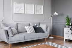 Posters above grey sofa with pillows in living room interior with lamp and plant on cabinet. Real photo. Concept stock images