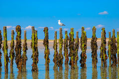 Postes con marea baja Fotografía de archivo