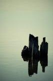 Postes de madera en el lago Imagen de archivo