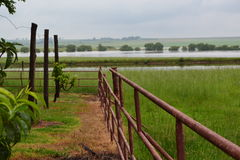 Postes en campo con la descripción del agua Imagen de archivo libre de regalías