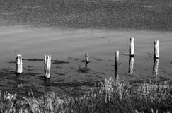 Postes en el lago Imagenes de archivo