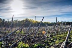 Postharvest zonnebloemresidu's alvorens in de grond te verdienen en verwerkend door biodestructor stock foto
