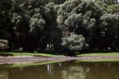 Posti di pesca sulle armi di Danubio fotografia stock