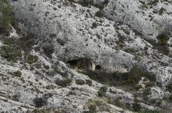 Posti turistici della Spagna caverne Immagine Stock Libera da Diritti