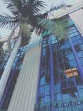 Postkantoor en palm royalty-vrije stock foto