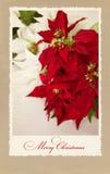 Postkarte für Weihnachten Stockfoto