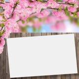 Postkarte mit blühendem Baum des neuen Frühlinges und leerer Platz für y Lizenzfreie Stockbilder