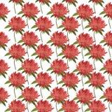 Postkarte mit Blume Astra für Ihr Design Stockfotos