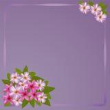 Postkarte mit Blumenstrauß des Plumeria Stockfotografie