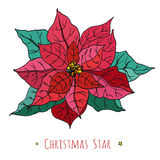 Postkarte mit dekorativen Weihnachtsstern-Rotblumen Botanische Illustration des Vektors Stockfoto