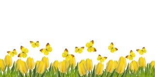 Postkarte mit frischen Tulpen und Gras Stockbild