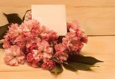 Postkarte mit Kirschblüte-Blumen Lizenzfreies Stockbild