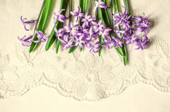Postkarte mit Lügenspitze der lila Hyazinthen Stockbilder