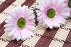 Postkarte mit rosafarbenen Blumen Stockbild