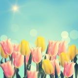 Postkarte mit Tulpen der frischen Blumen und leerer Platz für Ihr te Lizenzfreie Stockfotos