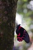 Postman Butterfly on tree trunk stock image