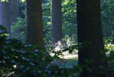 Posto calmo e pacifico nella foresta Fotografia Stock