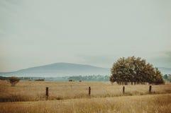 Posto calmo Estate calda natura, le montagne, campo, albero immagine stock