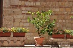 Posto Cosy con l'albero ed i fiori Immagine Stock