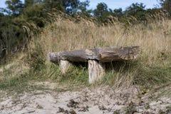 Posto da riposare e sedersi nella foresta Fotografie Stock Libere da Diritti