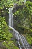 Posto del parco nazionale di Great Smoky Mountains di mille gocciolamenti fotografia stock