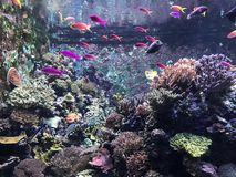 posto del pesce Fotografie Stock Libere da Diritti