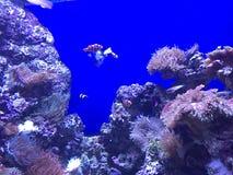 posto del pesce Immagine Stock Libera da Diritti