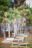 Posto della foresta Fotografia Stock
