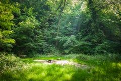 Posto di campeggio della foresta Fotografia Stock