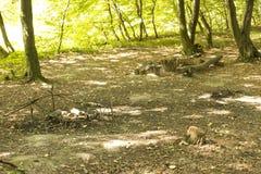 Posto per il picnic nel legno Fotografia Stock Libera da Diritti