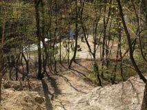 Posto piacevole in foresta Immagini Stock Libere da Diritti
