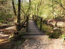 Posto piacevole in foresta Fotografie Stock Libere da Diritti