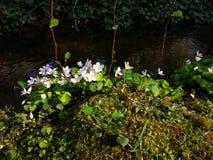Posto piacevole in foresta Fotografia Stock Libera da Diritti