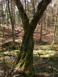 Posto piacevole in foresta Immagini Stock