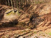 Posto piacevole in foresta Fotografia Stock