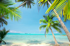 Posto tropicale Fotografia Stock Libera da Diritti