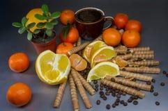 Postre dulce con las frutas y las galletas, casquillo del café Imagen de archivo libre de regalías