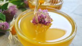 Postre fresco del verano de la cámara lenta del trébol de la flor de la miel almacen de metraje de vídeo