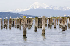 Posts adn Mount Baker Stock Images
