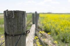 Posts de la cerca en el campo del Canola Imagen de archivo