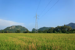 Posts de la electricidad en campo del arroz Fotografía de archivo libre de regalías