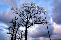 Posts de la lámpara contra el cielo holandés nublado Imágenes de archivo libres de regalías