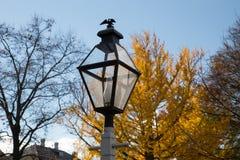 Posts de la lámpara de la caída Foto de archivo