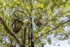 Posts de la lámpara en los árboles Luz de calle delante de árboles Fotografía de archivo