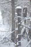 Posts de la nieve Imagen de archivo libre de regalías