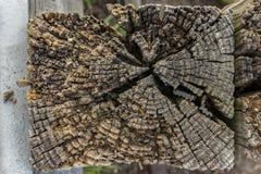 Posts de madera Fotos de archivo
