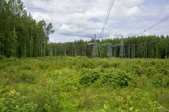 Posts with electric wires. In the forest Royalty Free Stock Images
