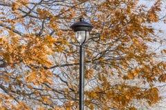 Posts negros adornados de la lámpara del hierro en medio de los robles del otoño con vibrante Foto de archivo