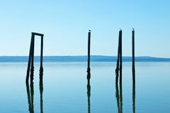 Posts and Seagulls at Kayak Point Royalty Free Stock Photo